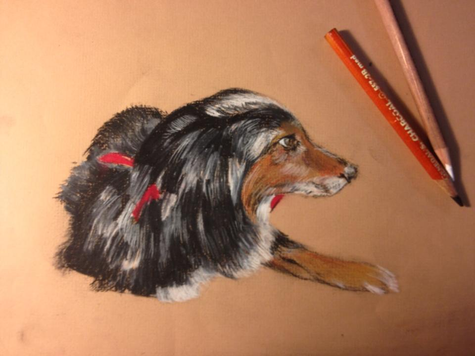 jackdog